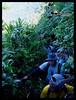 Kilang Assault (BlackMarbleWorld) Tags: mt group mountaineering ilocos laoag norte pinakbet obsidian apayao kilang palmc