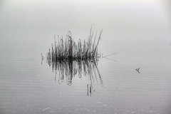 Tufty (Dave Trott) Tags: mist lake water birds fog reflections boats islands scotland foggy loch lochlomond
