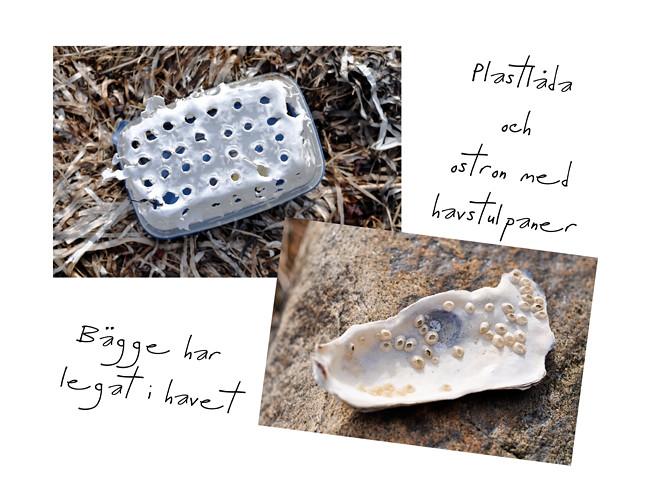 plast & ostron