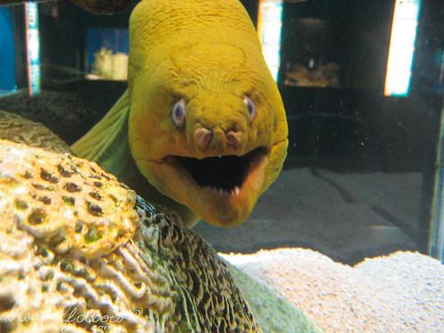 happy eel