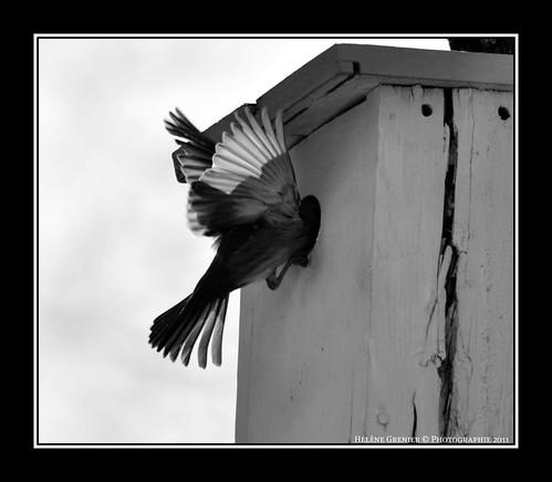 Les ailes d'un ange