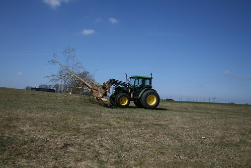 Tractor towing a tree