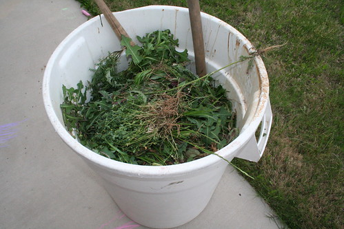 Trash full of weeds