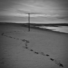 footprints (~Ventnor~) Tags: wood uk bw beach canon square landscape island mono sand footprints sigma pole holy flats northumberland staff crop format 1020mm waymarker tidal lindisfarne causeway 400d