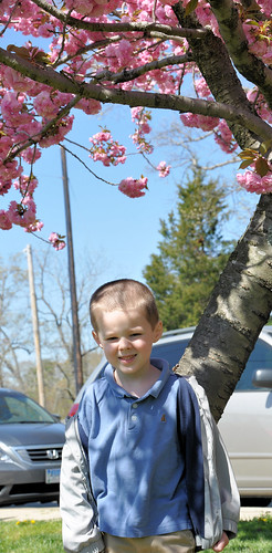 egg hunt under cherry tree
