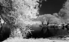 Good Friday (photon tamer) Tags: longexposure light blackandwhite tree nature water grass river germany landscape bavaria spring availablelight branches noflash infrared goodfriday irphotography 720nm nikond3 whitefoliage nikonafsnikkor1735mm128d