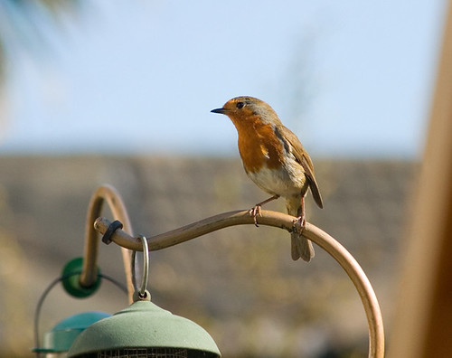 ROBIN: 23 April 2011