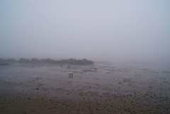(Skellibobs) Tags: sea mist beach fog coast sand shell pebbles east fret reighton