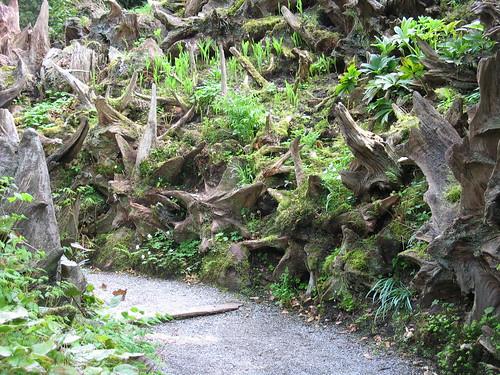 Stumpery - Biddulph Grange Garden - Biddulph