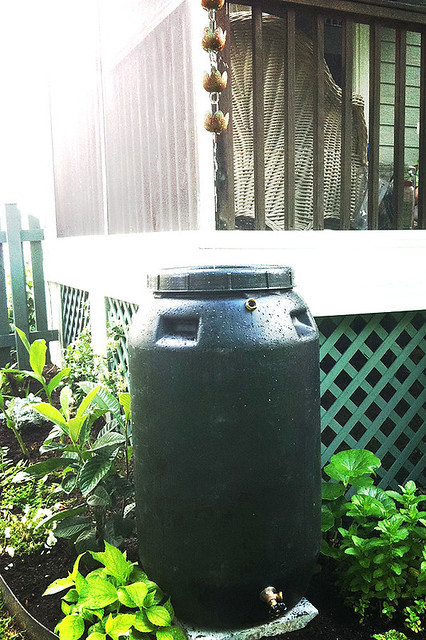 Rain Barrel in action