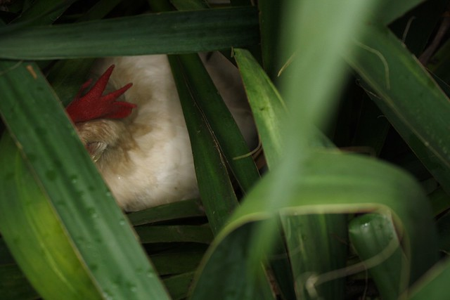 secret nest