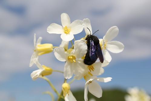 Soñaba con la primavera... by Inocencia M