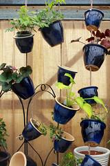 Plant Hanger (LadyDragonflyCC - >;<) Tags: flower color macro art canon ceramic spring pots stamen bloom april t3i 2011 600d kissx5 cimalacustomphotography