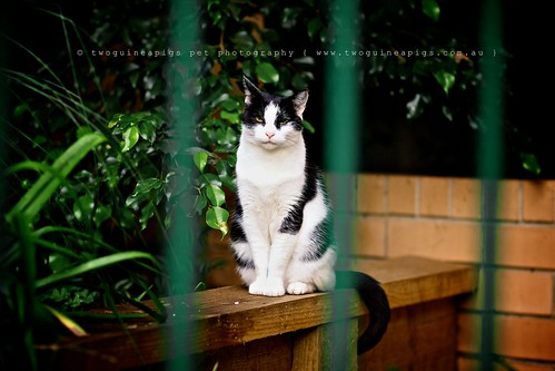 Poised street cat Amelie, by twoguineapigs.com.au
