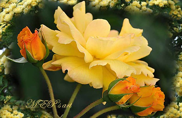 yellow greetings for all my Friends