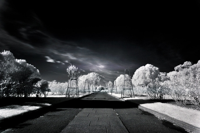 Rose Garden, Esplanade in Infrared 850nm