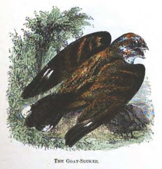 The Natural History of Selborne-1861  - 14