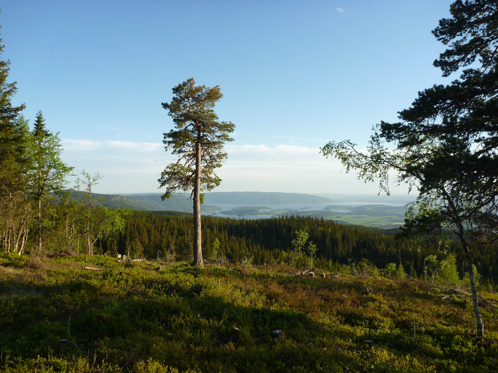 Utsikt fra Krokskogen mot Hole og Ringerike