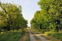 Il viale dei Gelsi (gpa59) Tags: oasi larizza