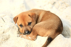 Puppy on Halong Bay (Andrea Schaffer) Tags: cruise dog beach puppy puppies asia southeastasia unescoworldheritagesite vietnam april halongbay  2011 vitnam  socialistrepublicofvietnam   canon450d canonefs1755mmf28usm baitulong hlongbay cnghaxhichnghavitnam indochinajunk 2days1night princeii  honcoisland