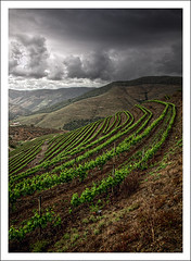 The Vineyards (Jose Viegas) Tags: portugal canon mark ii da douro 5d so joo 24105 pesqueira rgua
