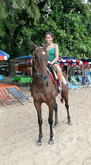 Horseback ride on the beach
