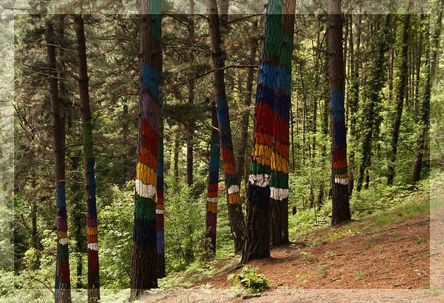 Colores en el bosque