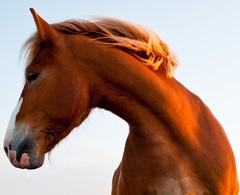 horse (kliffklegg) Tags: ireland horse galway connemara equine cleggan
