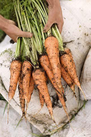 MPF Carrots