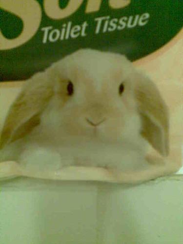 toilet bunny