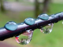 Gocce di pioggia - Raindrops (Silvana *_*) Tags: park parco reflection water rain drops wire acqua pioggia filo riflesso gocce goldstaraward