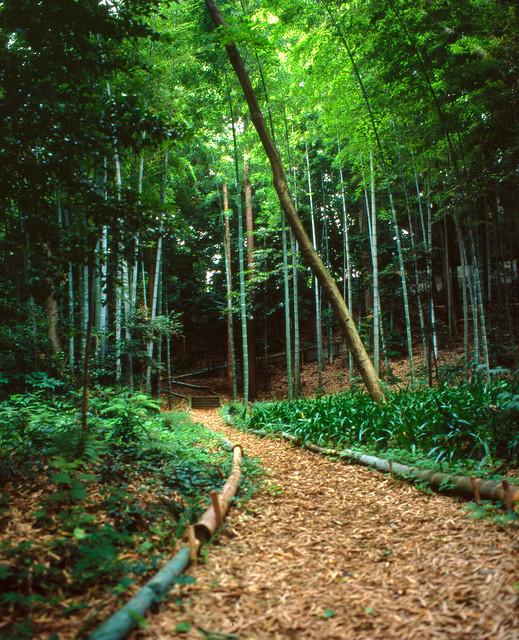 街中の竹林