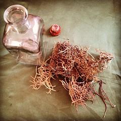 Preparando la maceración de la Orchilla (Roccella canariensis) para la obtención del tinte natural. Producto que será usado en una exposición educativa en #Lanzarote. #canarias #spain #naturaldye #tintenatural #orchilla #roccella #maceración #mayo #líquen (lanzarote rural) Tags: square squareformat hefe iphoneography instagramapp uploaded:by=instagram