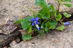 Determination (Nikon Guy 56) Tags: flower floral floralappreciation