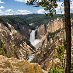 They Named the Park...Yellowstone (Ron Drew) Tags: nikon d800 yellowstone yellowstonenationalpark waterfall artistspoint nationalpark river trees canyon cliff yellowstoneriver summer lowerfalls wyoming rocks