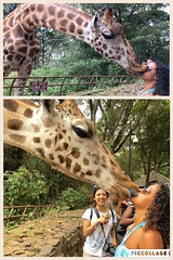 "I just wanted a normal French kiss but every time I tried, Salma had another plans with her tongue 😜😂 Giraffe center. Nairobi. Kenya. August 2016 • <a style=""font-size:0.8em;"" href=""http://www.flickr.com/photos/147943715@N05/29547778563/"" target=""_blank"">View on Flickr</a>"