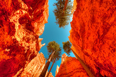 110422_JTSg_2465_h.jpg (panafoot) Tags: usa nature landscape outdoors ut rocks hiking geology brycecanyonnationalpark