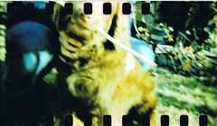 dash 1 (monkey_and_alien) Tags: dog pet blur film bulb 35mm garden iso100 outdoor crossprocess sunny happyaccidents sprockets paintinglike holga120gcfn fujiprovia