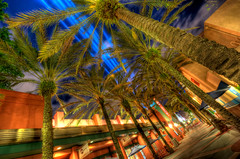 ABC Commissary (~Life by the Drop~) Tags: world blue night palms lights orlando nikon florida disne