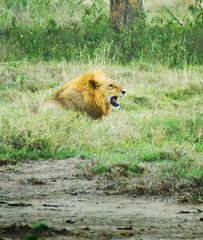 "PhotoFly Travel Club Kenya Safari 2011! • <a style=""font-size:0.8em;"" href=""http://www.flickr.com/photos/56154910@N05/5892408247/"" target=""_blank"">View on Flickr</a>"