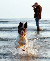 Brighton beach (Alan MacKenzie) Tags: sea dog sussex march spring brighton tide brightonbeach leaping alanmackenzie springtide2011