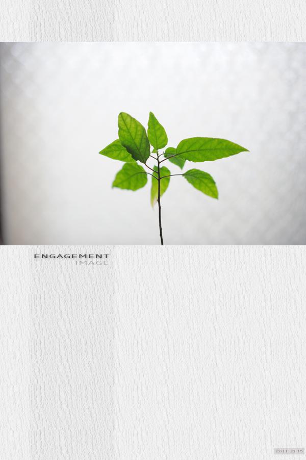 20110515bookcover