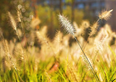 Fuzzy September (SCBCaptures) Tags: sunlight green grass blurry fuzzy baltimore shining