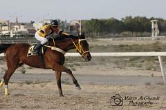 حصان - Horse (Mazen_Alghamdi) Tags: canon 75300 mazen مسابقة سباق حصان 550d الخيل كانون خيول الغامدي مازن الجبيل alghamdi الصناعية احصنة