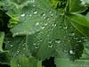 Waterdrops 09.05.2012