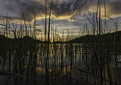 Through the reeds (kidda63) Tags:
