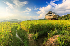 Hut and rice field (cwiratgasem) Tags: morning travel summer food mist mountain plant color green art tourism nature beautiful field yellow architecture landscape asian asia pattern view rice paddy terrace outdoor farm country hill farming steps grow culture landmark line east hut valley thai plantation knowledge production growing ladder grains agriculture patchwork eastern cloudscape irrigation rhythm cultivation terraced intellect