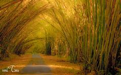 Chaguaramas, Trinidad and Tobago (miTsu-llaneous) Tags: nikon cathedral bamboo trinidad chaguaramas d5200
