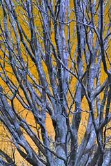 Goodrich Castle Car Park Tree (unclebobjim) Tags: portrait sky tree composite control lulu vivid hypothetical artificialnature vividimagination instantfave artforeveryone stickybeak sharingart showcaseimages 2exhdr art~2014 artmuseion