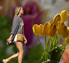 Yellow Tulips (swong95765) Tags: flowers woman female lady blonde beauty pretty walk tulips perspective